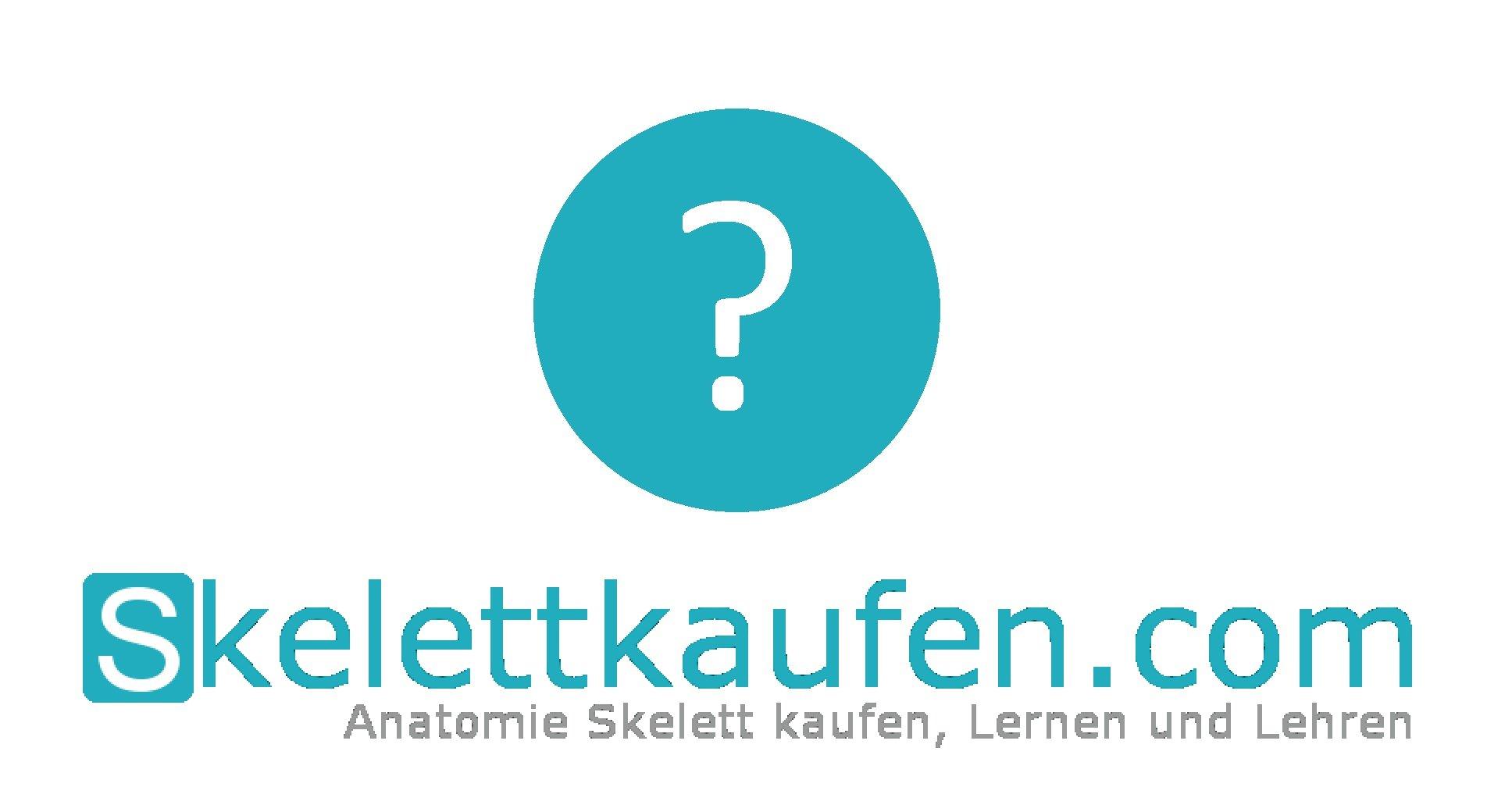 Blog über Skelettmodelle Skelett kaufen Anatomie Lernen menschlicher Knochenbau lernen Tipps für Medizinstudium Anatomie