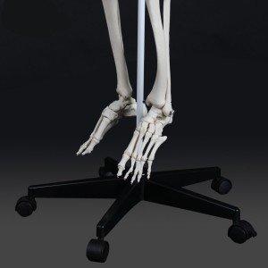 menschen Skelett kaufen 4